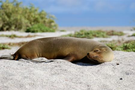 Beobachten Sie die einzigartige Vielfalt der Tierwelt auf den Galapagos Inseln auf einer Reise mit uns