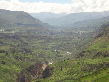 Erleben Sie den Colca Canyon mit seinen typischen Terrassen auf einer Peru Rundreise