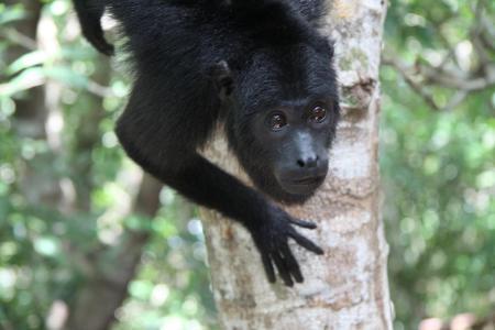 Affe im Amazonas zu entdecken auf der 15 Tage Rundreise