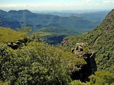 Ein grünes Paradies im Tijuca Nationalpark