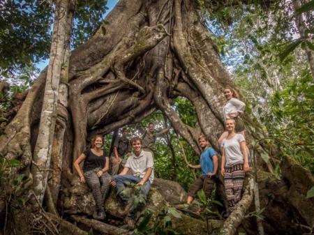 Imposante Baumwurzel im Atlantischen Regenwald