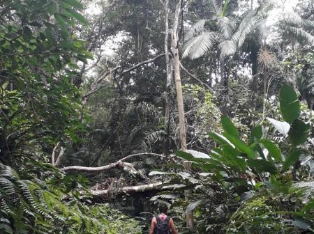 Ein Wanderer bahnt sich den Weg durch den dichten Regenwald an der Küste von Rio de Janeiro