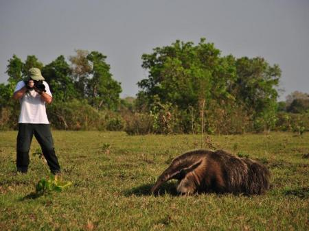 Fotograf fotografiert einen Ameisenbär im Süd-Pantanal